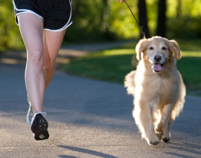 Get Your Fitness on with Fido
