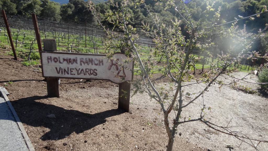 holman_ranch_vineyard
