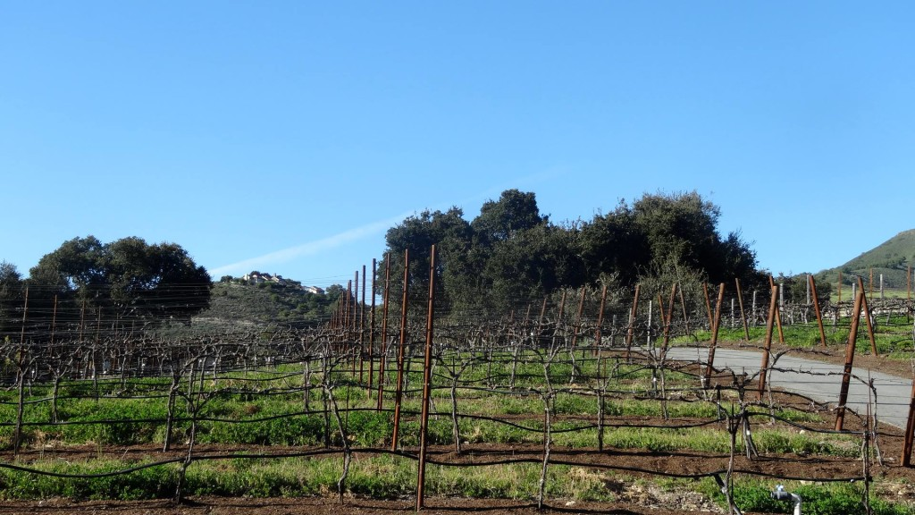 holman_ranch_vineyard1